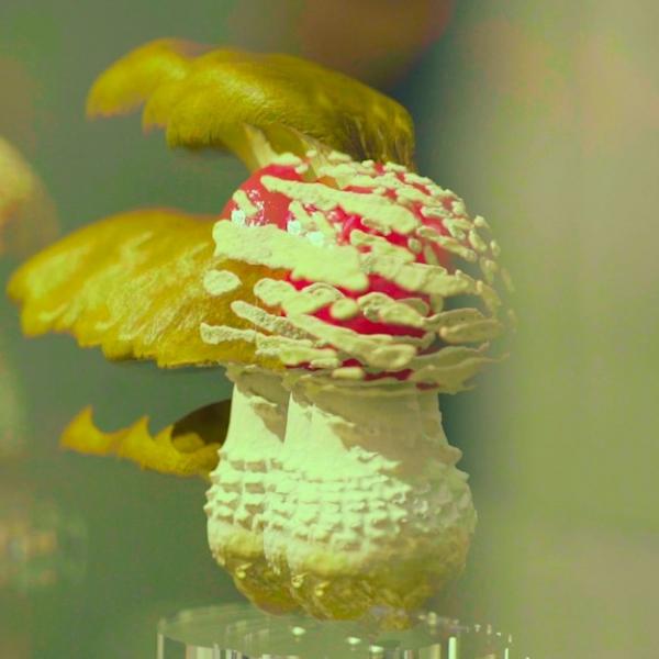 """""""农业科学艺术家""""卡斯滕·霍勒:蘑菇通往另一个世界"""