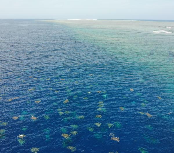 别的简报|科学家用无人机捕捉到绿海龟迁徙的惊人瞬间