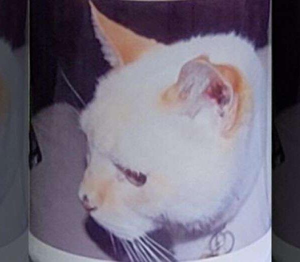 别的简报|亚特兰大一去世 12 年的猫收到了总统选举投票注册表