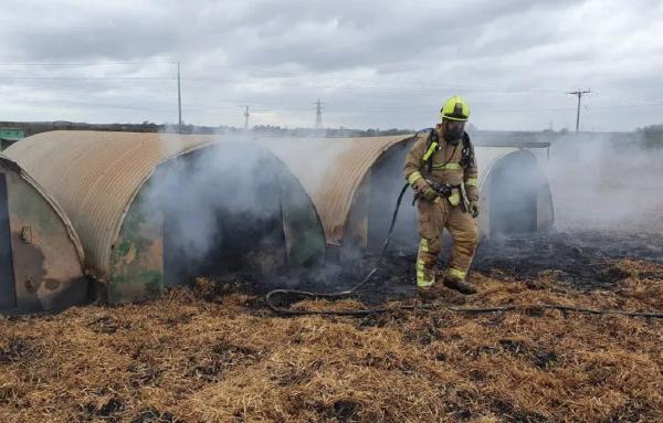 别的简报|英国农场一头猪拉出了误食的计步器,其屁不小心引起火灾