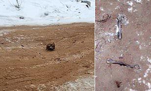 """别的简报丨俄版 """" Highway to Hell """" : 西伯利亚公路上的防滑沙里混着人类骸骨"""