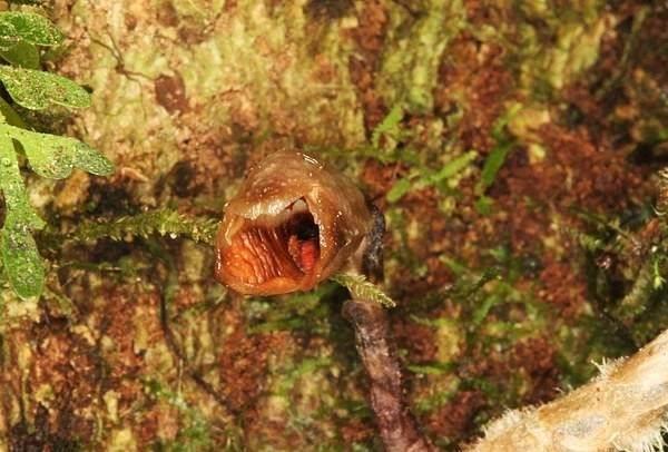 别的简报 | 科学家发现了世界上最丑的兰花