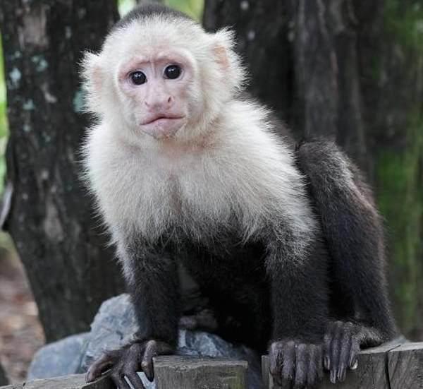 别的简报 | 研究发现,猴子和你一样,在打游戏时会在一个关卡上纠结很久