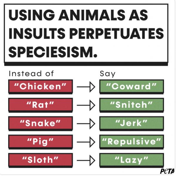 别的简报|动保组织呼吁大家别再拿动物骂人了