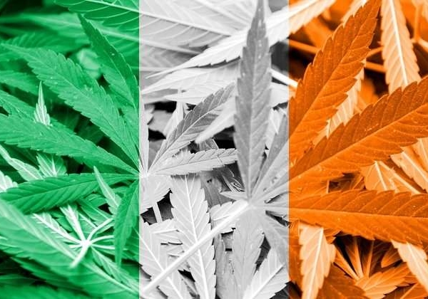 别的简报 | 男子举报租客种大麻后自己在家种起了大麻